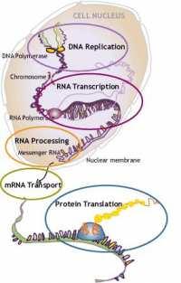 Pregleden proces nastajanja proteina