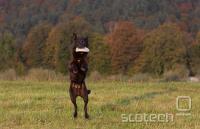 Oktobra pozno popoldne, dobra svetloba, pes ujame frisbee, en sam posnetek, EOS 40D, EF 70-200 2.8 IS L, ISO 320, 1/800s, f 1:3.2