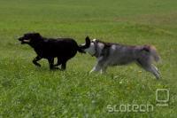 Septembra dopoldne, dobra svetloba, psica ujame psa, en sam posnetek, EOS 40D, EF 70-200 2.8 IS L, ISO 100, 1/1600s, f 1:3.2