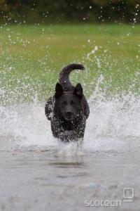 Oktobra zvečer, oblačno, pes teče za žogo, več posnetkov, EOS 40D, EF 70-200 2.8 IS L, ISO 1600, 1/640s, f 1:3.2