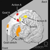 Aktivnosti na fMRI pri opravljanju dveh nalog hkrati