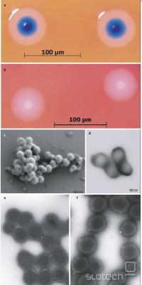 Celice pod mikroskopom
