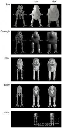 3D modeli različnih fosilnih najdb tiranozavrov.