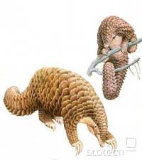 Luskavec je med 30 in 100 cm velik strunar, ki živi v toplih predelih Afrike in Azije. Odlikuje ga značilni oklep iz lusk, ob nevarnosti pa se lahko zvije v kepo, podobno kot ježi. Aktiven je ponoči, ko vohlja predvsem za termiti. Njihova gnezda odpre z močnimi kremlji na prednjih tacah, nakar jih izvleče z dolgim in lepljivim jezikom. Zob namreč nima.