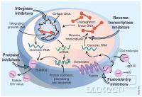 Tarče protiretrovirusnih zdravil.