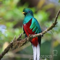 Oktobra pride Ubuntu na Q, Quantal Quetzal, po nacionalnem simbolu Gvatemale.