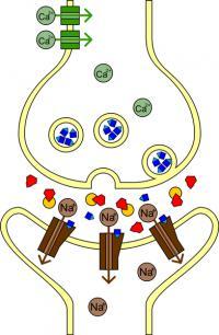 Acetilholin (modro), acetilholinesteraza (rumeno), sarin (rdeče).