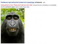 Prejeli so zahtevek za odstranitev te fotografije, ki jo je posnela opica sama s fotoaparatom, ki ga je fotograf pustil v parku v Indoneziji. Fotograf je trdil, da ima avtorske pravice. Wikipedija slike ni umaknila.