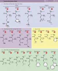 Prolin je edina aminokislina, ki ima sekundarno aminsko skupino in ciklično zgradbo.