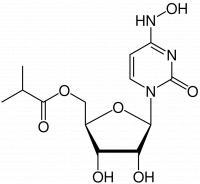 Molnupiravir lahko nadomesti citidin ali uridin, zato je nastala RNA neuporabna.